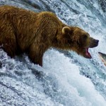 Mother nature is a balance. Try to convince this bear to be a vegan