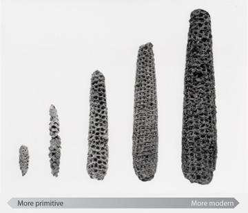Corn progression