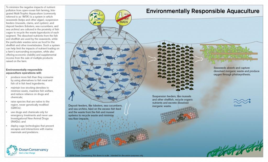 Semi Intensive Fish Farming  FishFarm Solutions - HOW TO FEED YOUR FISH